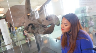 Museum Photo - Dinosaur Fossils